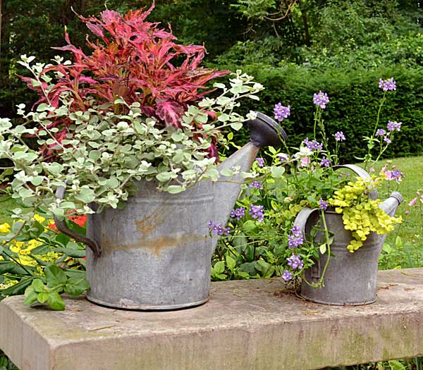 gardening-in-an-old-watering-can