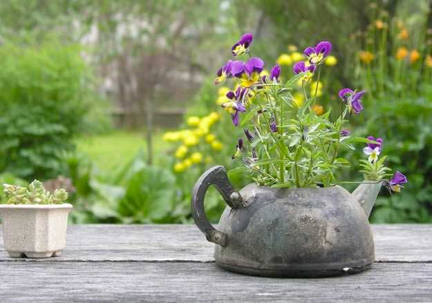 old-teapot-used-for-planting