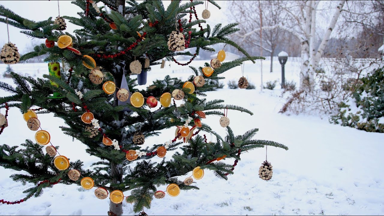 Repurpose an Old Christmas Tree Into a Bird Feeder for Your Garden ...